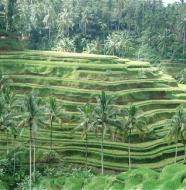 bali greenery