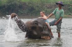 farina laos elephant