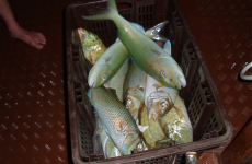 Bountiful catch of Maldivian Fish