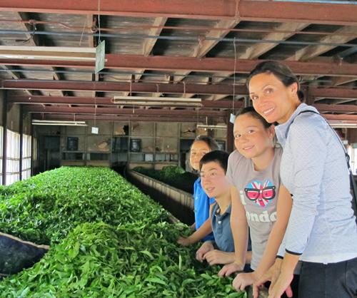 Norwood Tea Factory - Hatton, Sri Lanka